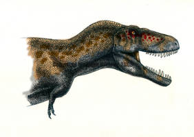 Tyrannosaurus rex II- coloured by T-PEKC