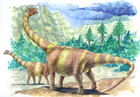 Camarasaurus by T-PEKC