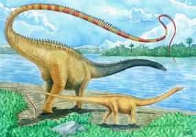 Diplodocus hallorum by T-PEKC