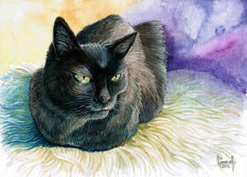 Domestic cat by T-PEKC