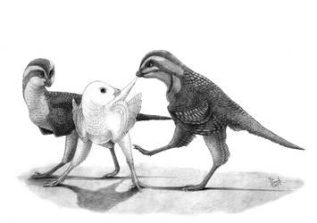 Eosinopteryx brevipenna by T-PEKC