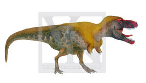 Tyrannosaurus rex by T-PEKC