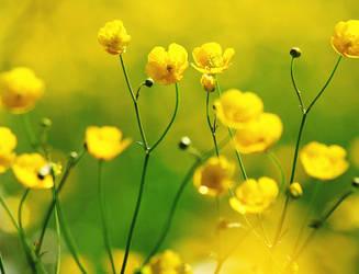 flowers7 by rhcp-csi