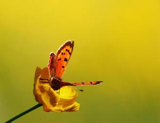 butterfly by rhcp-csi