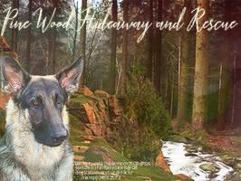Pine Wood Hideaway and Rescue by BerlinlavsMarie