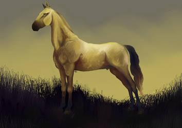 Saddlebred horse by Venorra