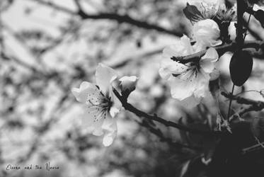 Cherry Blossom by Eivone-and-the-Noose
