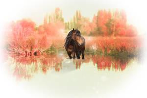 Quiet Dreams by Priya-Aishia