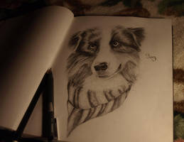 Australian Shepherd Dog by Dovahkiin33
