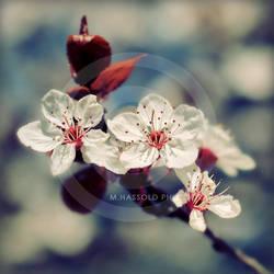 spring by Finvara