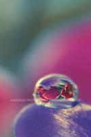 Spring Drop by Finvara