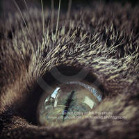 Lunas eyes by Finvara