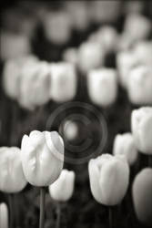 Audreys Flowers by Finvara