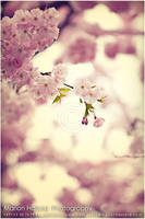 oh those colors of spring by Finvara