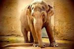 Elefante - Bioparco Roma by ideareattiva