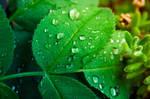 Nature 2011_8 by ideareattiva