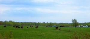 Brown Cows by DaLeahWeathers