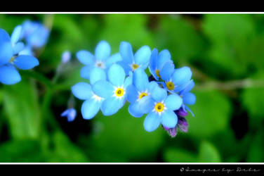 Forget Me Knot by Images-By-Debs