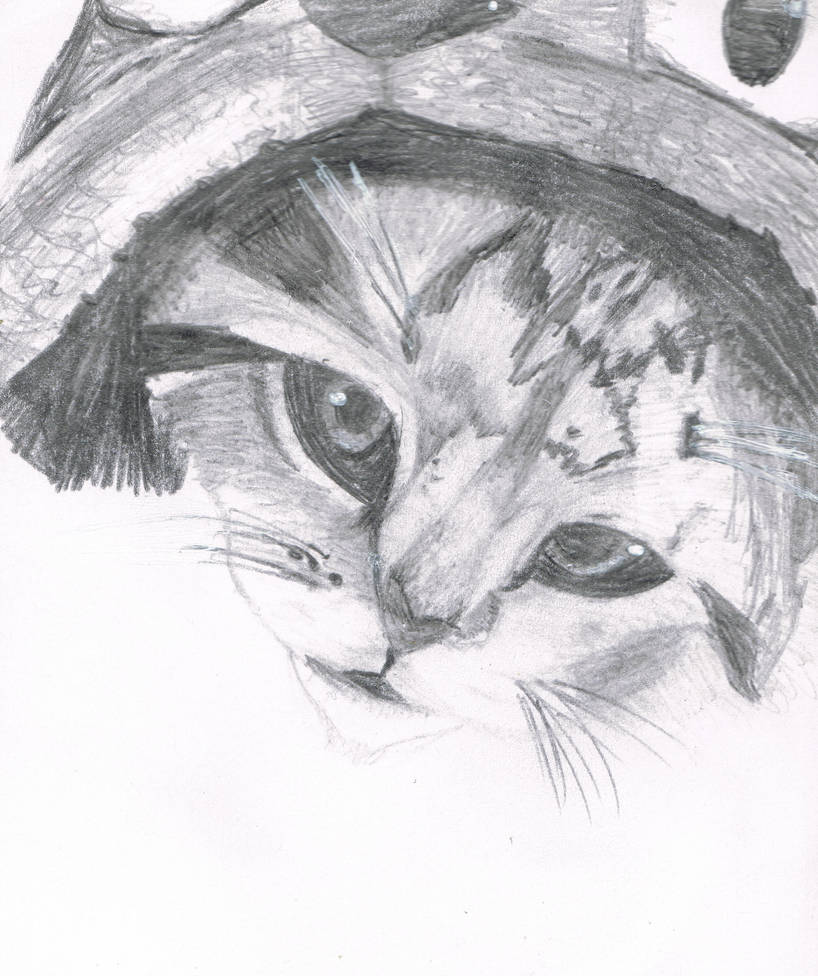 Dibujo Gato Realista By Vicentex2002 On Deviantart