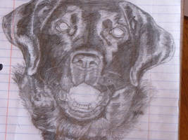 lab drawing by CierraFrye