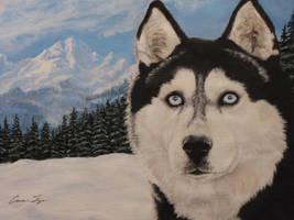Husky painting by CierraFrye