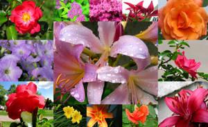 Summer Flowers by CierraFrye