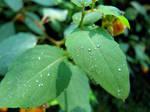 Drops by CierraFrye