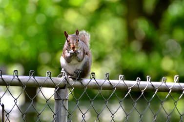 Squirrel by CierraFrye