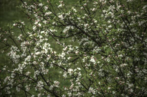 Apple tree thing by Nofew
