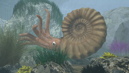 Ammonite 3D by 3DSud