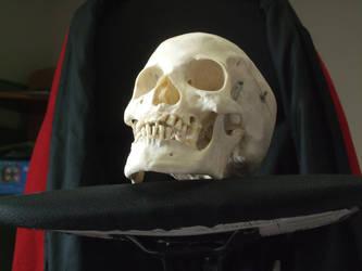 Human Skull 08 by qxvw198