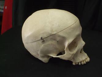 Human Skull 11 by qxvw198