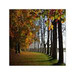 Plouvorn's autumn 02 by Objectix