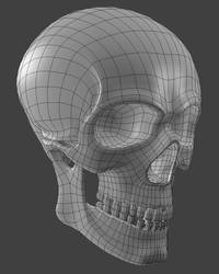 Skull Study by turjuque