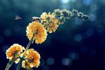 lantana jaune by EchoRukia