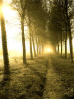 Sunshine Path by Lennart-s
