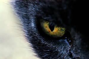The Predator Inside You by denimandfrills