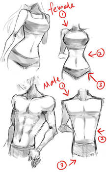 Typical female and male body tips by Neire-X