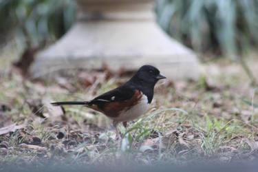 NATURE Bird 3 by jimmylee1562