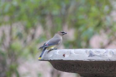 NATURE bird 1 by jimmylee1562