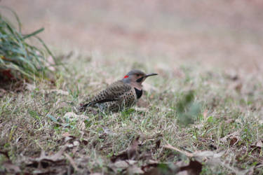 NATURE Bird 8 by jimmylee1562