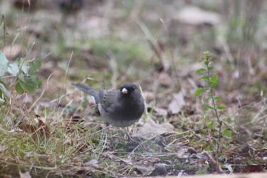 NATURE Bird 4 by jimmylee1562
