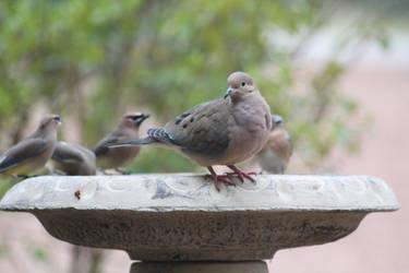 NATURE Bird 13 by jimmylee1562