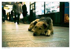 The Dog's story... by II-calm-II