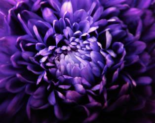 Purple rain by zer0nyx