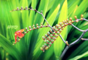Tropical Zest. by zer0nyx