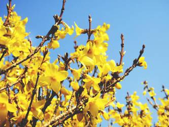 Spring by zer0nyx