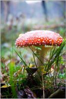 Mushroom by s-w