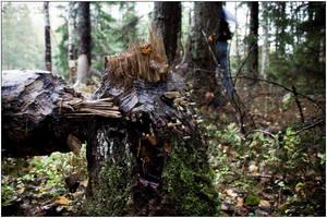 Broken tree 01. by s-w