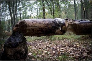 Broken tree 02. by s-w